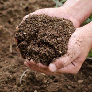 Groeiende bodemvruchtbaarheid