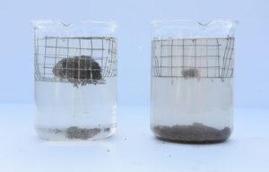 A-mikroorganizmusok-szerepe-a-talaj-víztartó-1